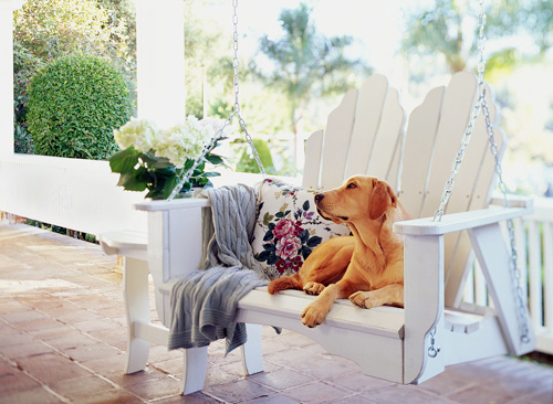 dog_on_porch1