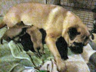 susie-and-puppies-121112-248bb97fa4458c0ca05ba9869bc4eb9791710276